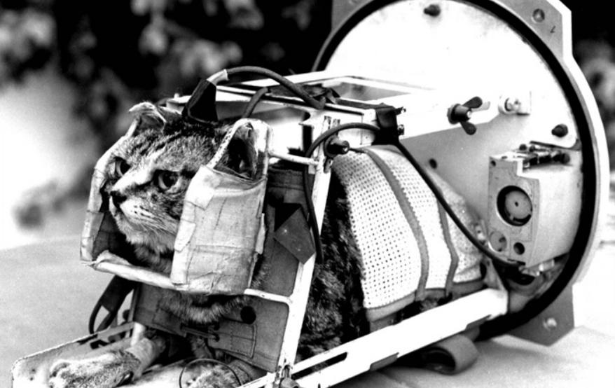 Lemkelemke Felicette First Cat In Space